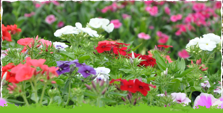 Spring Gardens Nursery